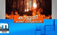 Anamudi Shola Wildfire: Huge Loss For Farmers