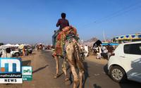 Take A Camel Safari In Pushkar