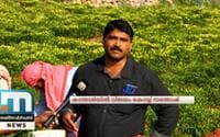 Santhosh Reaps Good Harvest In Chilly Cultivation