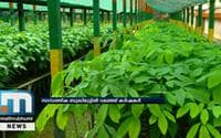 Rubber Nurseries In Kottayam Yet To Overcome COVID-19 Crisis