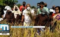 Agriculture Minister VS Sunil Kumar Dons Cap Of Farmer To Harvest Paddy