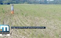 Lack Of Canal Water Supply; Crops In Mavelikkara At Stake